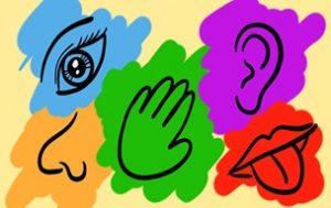 I 5 sensi del TPE